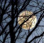 full-moon-in-trees-randy-steele